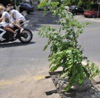 Клон бележи опасна дупка на хасковска улица (снимки)