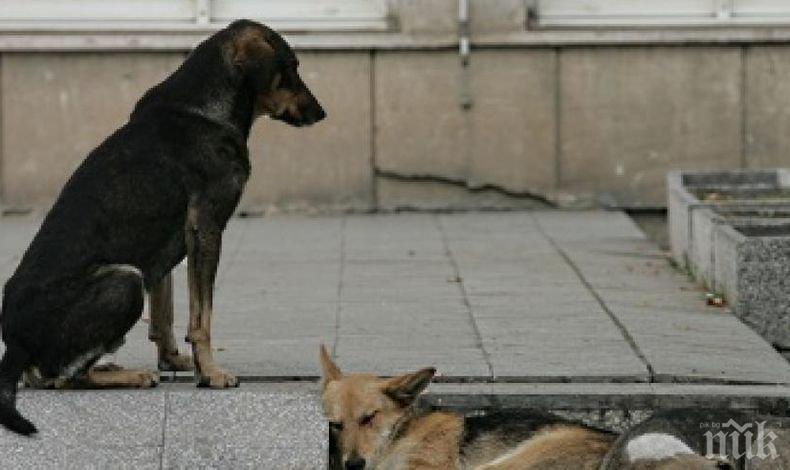 """ЗЛОВЕЩА НАХОДКА: Убити и изхвърлени кучета в язовир """"Дренов дол"""" шокираха кюстендилци (СНИМКА 18+)"""