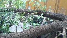 Работник с опасност за живота, дърво едва не го уби