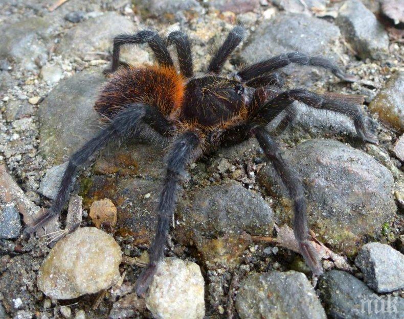 ЗЪЛ ГЕНИЙ: Коварен зет прогони тъща си с тарантула