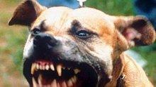 Кучета наръфаха до смърт българин в Малага
