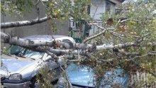 Дърво се стовари върху кола в Пловдив