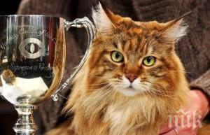Котки си мерят красотата във Варна