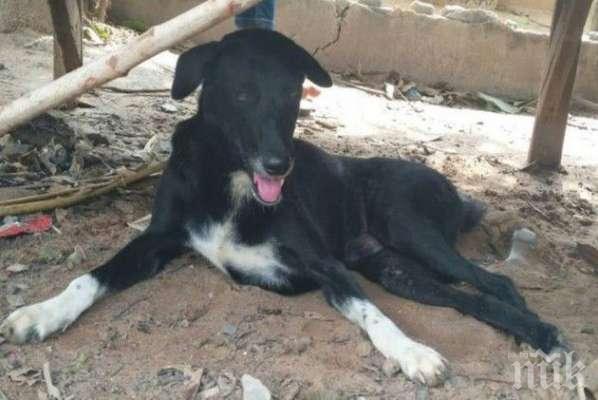 Куче спаси погребано от майка си бебе (СНИМКИ)
