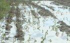 Още не се знае какво обезщетение ще получат битите от градушка земеделци в Свищовско