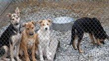 Жители на радомирско село излязоха на протест срещу съседка с 40 кучета
