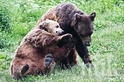 Паника в Родопите - мечка с две мечета обикаля над село Могилица (СНИМКИ)