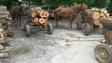 Тикнаха двама в ареста заради незаконен дърводобив