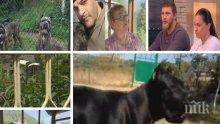 След трагедията във Владо Тричков: Как се стигна до убийството на човек от кучета