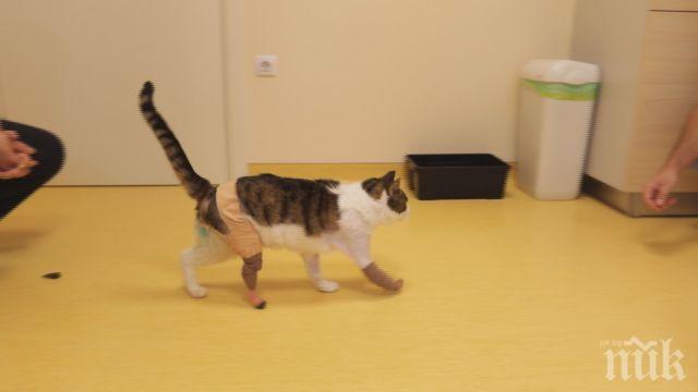 УНИКАЛНА ОПЕРАЦИЯ: Сложиха протези на блъсната от кола котка