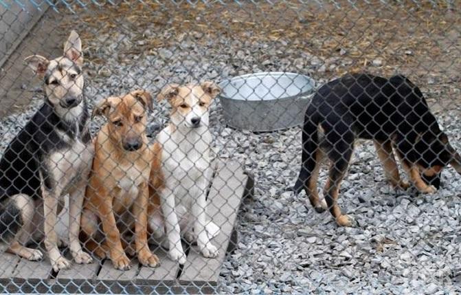 Ръст на осиновените кучета в София