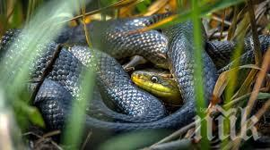 ШОК: Двуметрова дебела змия пълзи в градинка пред жилищен блок в Бургас
