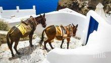 Френски активисти скочиха да бранят магаретата таксита на остров Санторини (СНИМКИ)