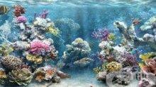 МРАЧНА ПРОГНОЗА: 17% от морските животни могат да изчезнат до края на този век