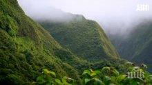 ТРЕВОГА: Близо 600 растения са изчезнали от природата
