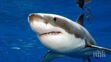 Паника на Адриатическо море: Огромна бяла акула, доплува до самото крайбрежие