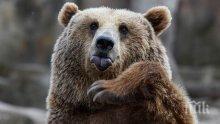 Откриха убита мечка до Самоков