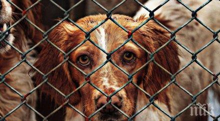 ВАРВАРСКО ЗВЕРСТВО В КИТАЙ: Над 10 хиляди кучета ще бъдат заклани на най-кървавия фестивал на 21 век - вижте на какво е способен човек от алчност (ШОКИРАЩИ СНИМКИ/ВИДЕО 18+)