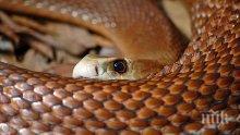 Биг Брадър за змиите и костенурките в Кресненското дефиле