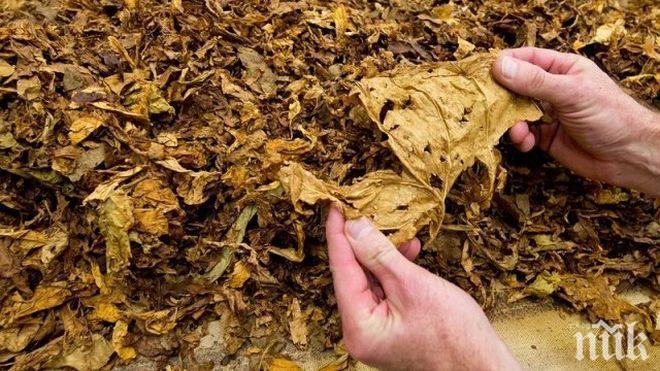 Специализираната прокуратура обвини група от 10 лица за нелегален тютюн