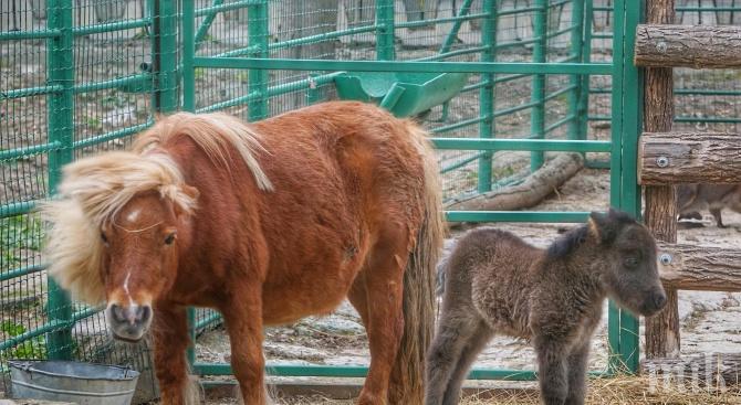 Ремонтират зоопарка във Варна за 1,2 млн. лева
