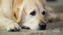 Уникално проучване: Кучешките очи манипулират хората