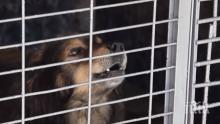 Няма обвинен за разкъсаното от куче дете в Кърджалийско