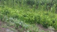БЕДСТВИЕ! Градушка очука градините в Раковски, стопаните плачат: Толкова труд, а за 15 минути помете всичко (СНИМКИ)