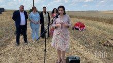 22% от площите с пшеница в страната вече са ожънати