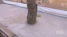 """Бетонираха дървета в столичния квартал """"Младост"""""""