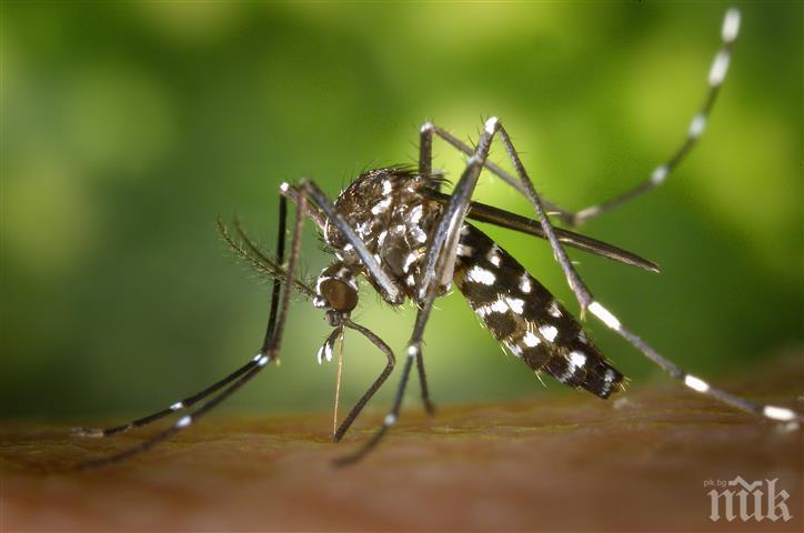 СВЕТКАВИЧНО: Пръскат още днес срещу комарите след заповедта на премиера Борисов