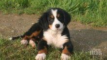 ЗВЕРСТВО: Изверг застреля домашно куче в Първомай