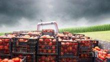 Македонски дъмпинг удари доматите