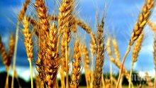 Ямболска област с добра реколта от ечемик и пшеница