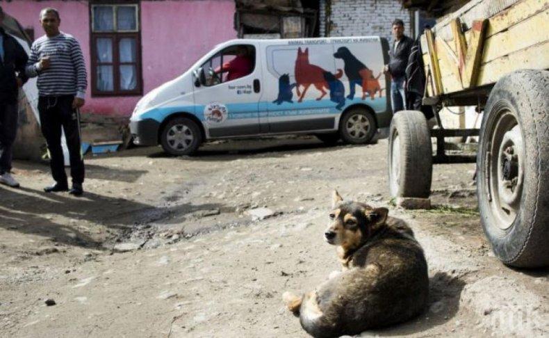 КАМПАНИЯ: Кастрират бездомните кучета и котки в Кюстендил