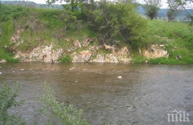 Мъртва риба изплува в приток на Марица
