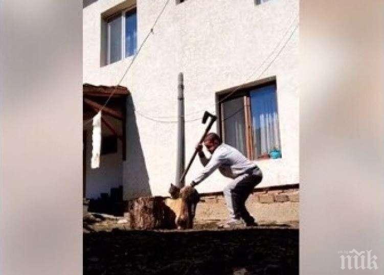 Условна присъда отнесе извергът, който уби котка с брадва