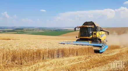 280 200 тона жито прибраха разград