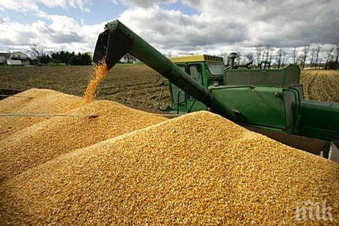 ДОБРА РЕКОЛТА: Средният добив от пшеницата в Добричко надхвърли миналогодишния