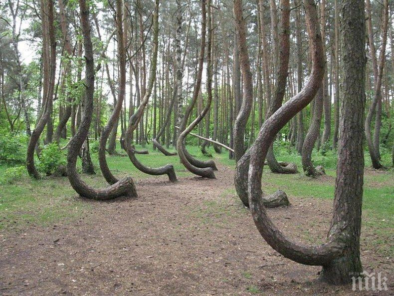 Ето къде се намира най-мистериозната гора в света