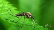 Край на досадните комари! Ето най-добрите домашни средства срещу тях