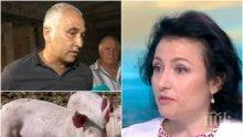 БЕДСТВЕНО ПОЛОЖЕНИЕ: Стопани отказват да колят прасетата си - Десислава Танева заговори за тежка икономическа криза заради африканската чума