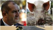 """Г-н Радев, излагате се! Какво е общото между Ф-16 и чумата по свинете – вашите """"Грипен""""-и ли?"""