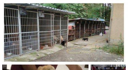 САМО В ПИК! АУТОПСИЯТА ДОКАЗА: Кучето Бианка от дупнишкия изолатор ликвидирано с отрова за гризачи (СНИМКА)
