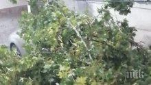 ОТ ПОСЛЕДНИТЕ МИНУТИ: Страшната буря, преминала през Варна, удари и Бургас - линейки и пожарни хвърчат из града