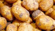 СЕЛСКА ДРАМА: Спипаха пенсионер да си вади картофите с трактор без регистрация, преспа в ареста
