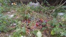 ЗАРАЗА: Неизвестен изхвърли епруветки с кръв в парк в Девня (СНИМКИ)
