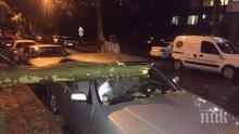 ИНЦИДЕНТ: Дърво смачка колата на бащата на Цвета Караянчева при бурята в Кърджали