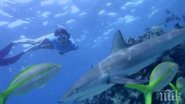 Нина Добрев спасява акули