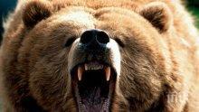 Полицейска кола катастрофира заради паднала върху нея мечка
